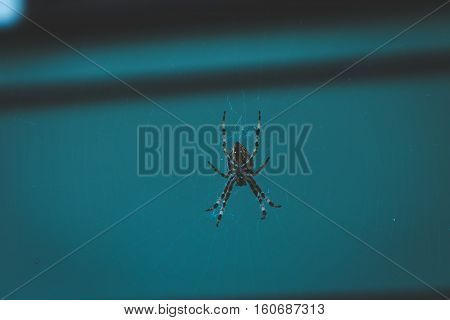 Large orb weaver spider in outdoor home setting. Dark and moody lighting.