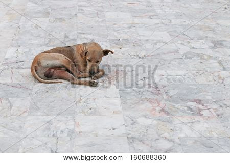 Dog pitiable sleeping on Marble floor with copy space for add text