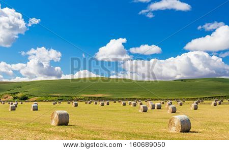 Field of hay bales on a beautiful summer day