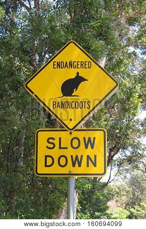 Australian road sign warning endagered bandicoot slow down