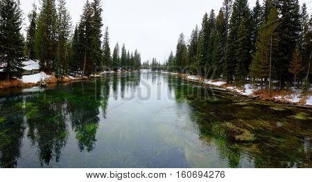 Winter River Flowing Past Forest of Pine Trees with Snow