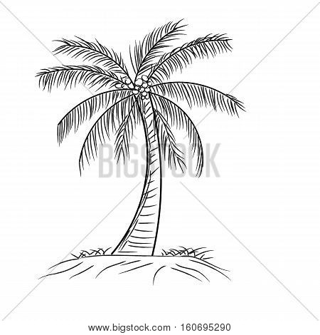 palm tree coconut with leaves Hand drawn style design in outline monochrome contour on white background Vector illustration