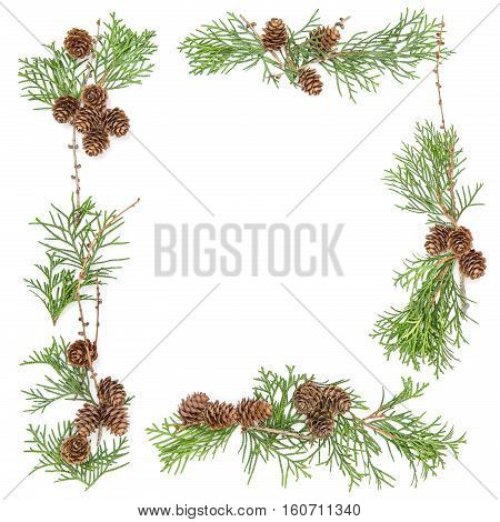 Floral frame. Christmas background. Thuja branches with cones on white