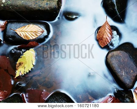 Fall Colors. Gravel At Mountain River Covered With Autumnal Leaves