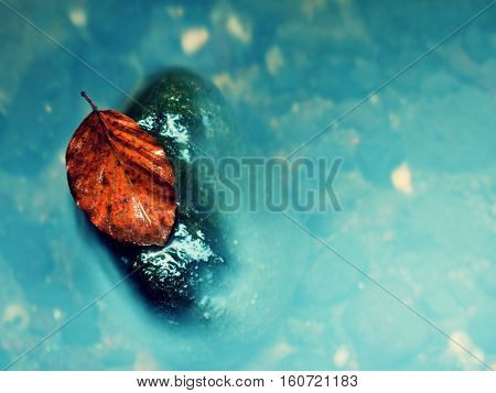 Colorful leaf from beech tree on basalt boulder in blurred mountain rapid stream. Blue blurred waves milky smoky water with reflections.