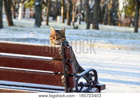 Cat is standing on a bench in the winter snowy morning