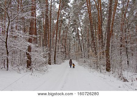 On the black branches of the tree lies a thick layer of snow (lots). The photo was taken in winter. Trees grow near the road. The path is a woman with a child. The background is blurred.