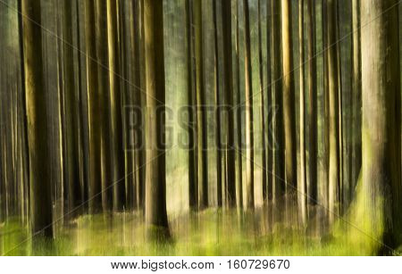 Pine trees at Hafren Forest with an impressionistic treatment