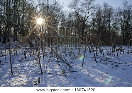 The radiant sun lights the abandoned winter park in the old noble estate