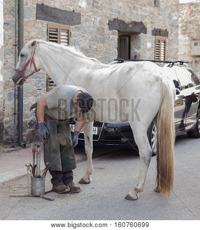 LAS HERRERIAS SPAIN - AUGUST 05: Horse farrier working on white horse on August 05 2016