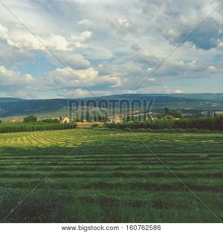 Farm field landscape in summer.  Sunshine on lush green plowed farm field with houses and orchards around field.  Hills, mountains, forest trees and white clouds blue sky background.Instagram effects.