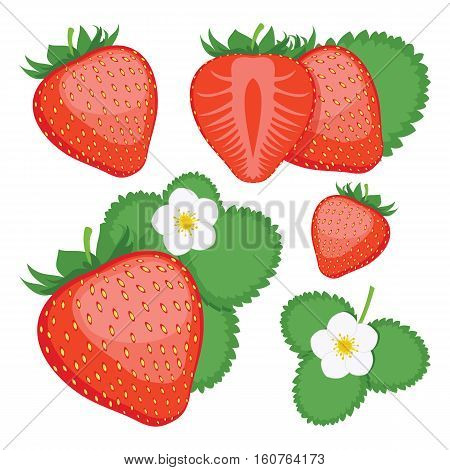 Strawberry. Collection of whole and sliced Strawberry berries. Vector illustration.
