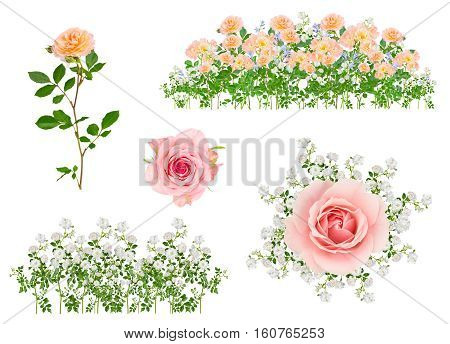 Collage of isolated rose flower arrangements on white background with no shadows.
