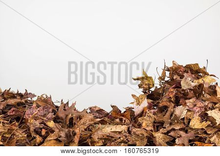 Background of piled dried autumn leaves in horizontal orientation with copy space.