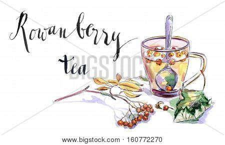 Cup of rowanberry tea twig of rowanberry and leaf hand drawn - watercolor Illustration
