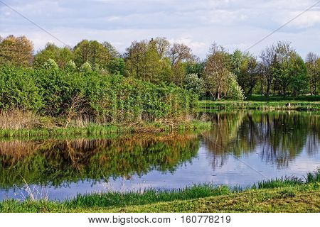 Trees Reflecting In Pond In Bialowieza National Park In Poland