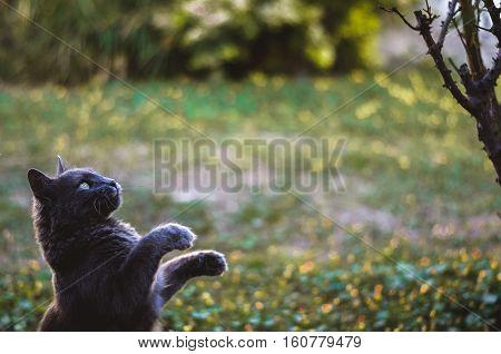 Gato en pose de leon de pelicula