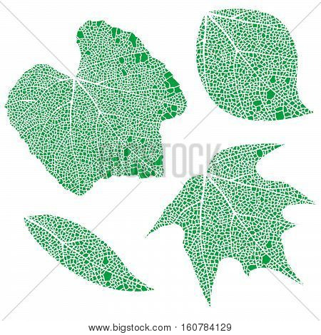 Four green lace miscelaneous leaves isolated on white.