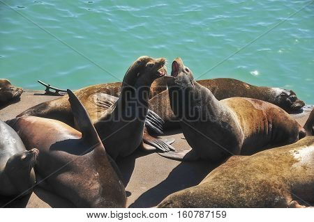 This is a photo of two sea lions.