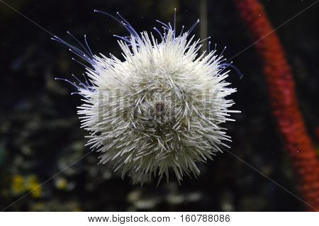 A sea urchin on the side of a tank