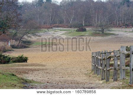 Sand dunes at Frensham Common in Surrey