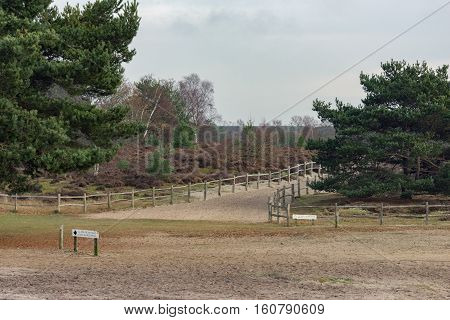Heathland at Frensham Common in Surrey, UK