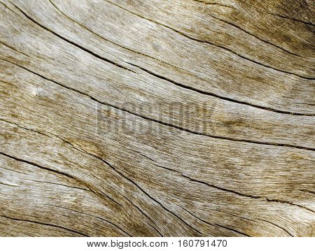 Warm wooden texture close up photo. Sepia beige wood background. White old tree near the sea. Curves and lines on rustic timber. Rough timber texture. Sea wood backdrop. Grey old tree without bark