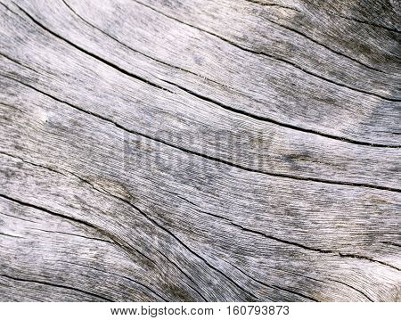 Warm wood texture close up photo. White and grey wood background. White old tree near the sea. Curves and lines on rustic timber. Rough timber texture. Sea wood backdrop. Grey old tree closeup image