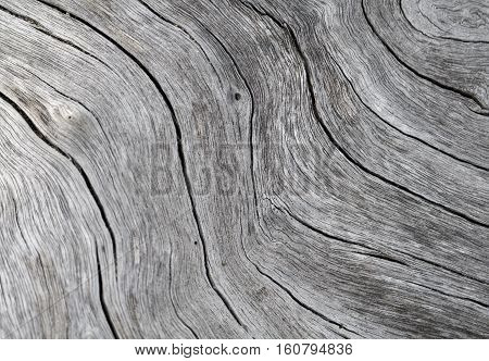 Timber texture close up photo. White and grey wood background. White old tree near the sea. Curves and lines on rustic timber. Rough timber texture. Sea wood backdrop. Grey old tree cracks ornament