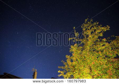Night view of tree on stellar sky