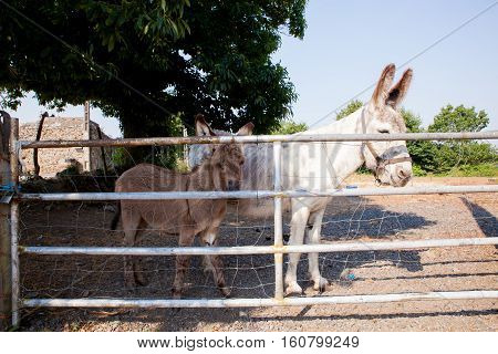 Donkey and baby donkey in the stable