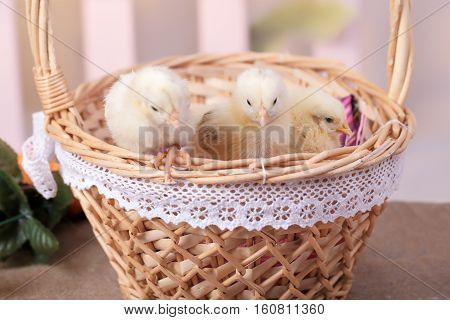 Beautiful decorative rooster farm spring rooster, chicken basket eggs nest