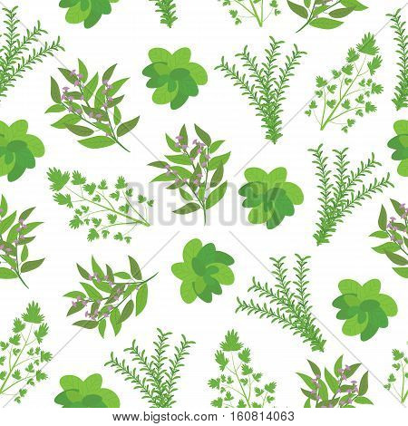 Seamless background of Herbs illustration with basil, sage, rosemary, and parsley on white background suitable for wallpaper, postcard, and wall decoration