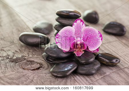 Phalaenopsis orchid and black stones on weathered wood background
