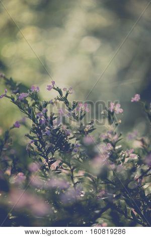 little Elfin herb vintage flower looks beautiful - toned