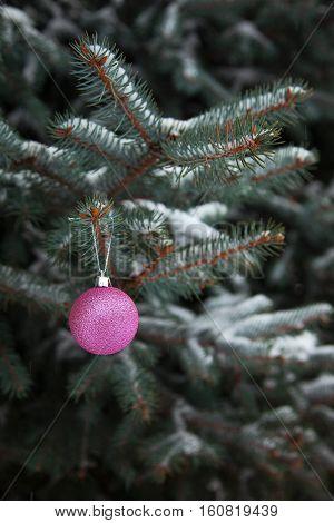 Christmas ball on the branch Christmas tree outdoor