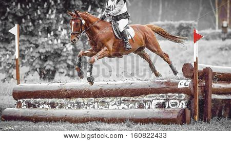 Rider jumps a horse during practice on a cross country eventing course, duotone art