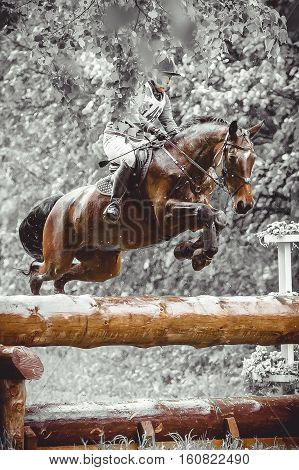 Young woman jumps a horse during practice on a cross country eventing course, duotone art