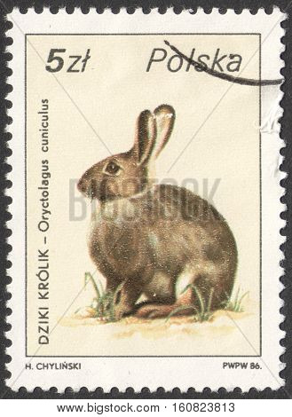 MOSCOW RUSSIA - CIRCA NOVEMBER 2016: a post stamp printed in POLAND shows an Oryctolagus cuniculus rabbit the series