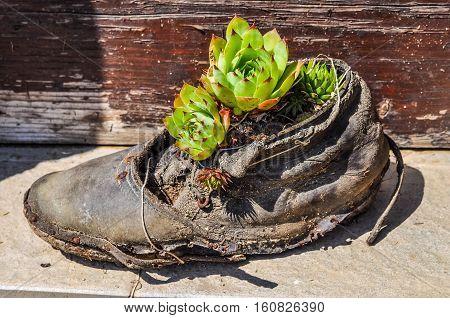 Hdr Cactus Plant