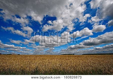 Cloudy sky over a cornfield in Poland