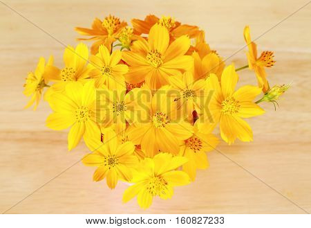 Beautiful yellow cosmos flower on wooden background.