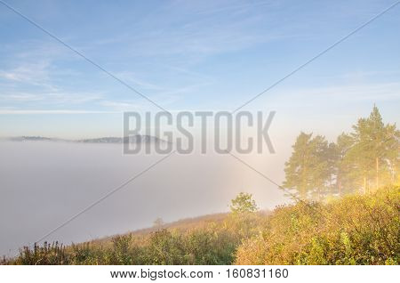 thick morning mist in coniferous forest. sunrise in dense fog in the coniferous forest. coniferous trees, thickets of green forest.