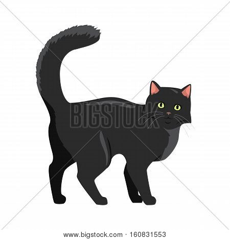 Cute black cat walking with raised tail flat vector illustration isolated on white background. Purebred pet. Domestic friend and companion animal. For pet shop ad, animalistic hobby concept, breeding