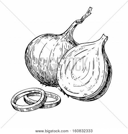 Onion hand drawn vector illustration. Isolated Vegetable engraved style object. Full, rings and Half cutout slice. Detailed vegetarian food drawing. Farm market product. Great for menu, label, icon