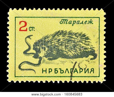 BULGARIA - CIRCA 1963 : Cancelled stamp printed by Bulgaria, that shows Hedgehog eating snake.