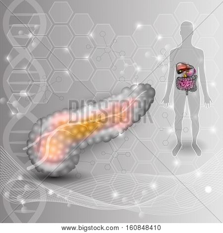 Pancreas anatomy drawing and human silhouette with pancreas and surrounding organs on an abstract scientific background