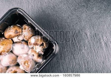 Rotten mushrooms covered with mold on a slate tile