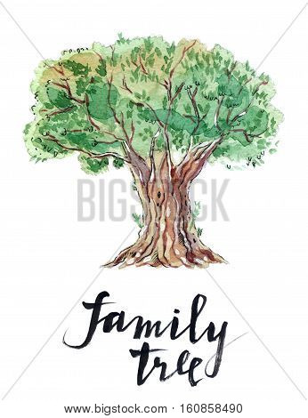 An old bountiful olive tree extracted hand drawn - watercolor Illustration