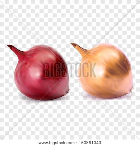 Whole bulb red and yellow onion, isolated on white background. Vegetarian food, organic, healthy food vector illustration. Vegetable nature vegan fresh food. Vector vegetables.